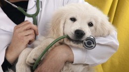 Purchase Insurance Plans for your Pet