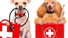 insurance-for-your-pet